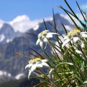 expo_edelweiss_011