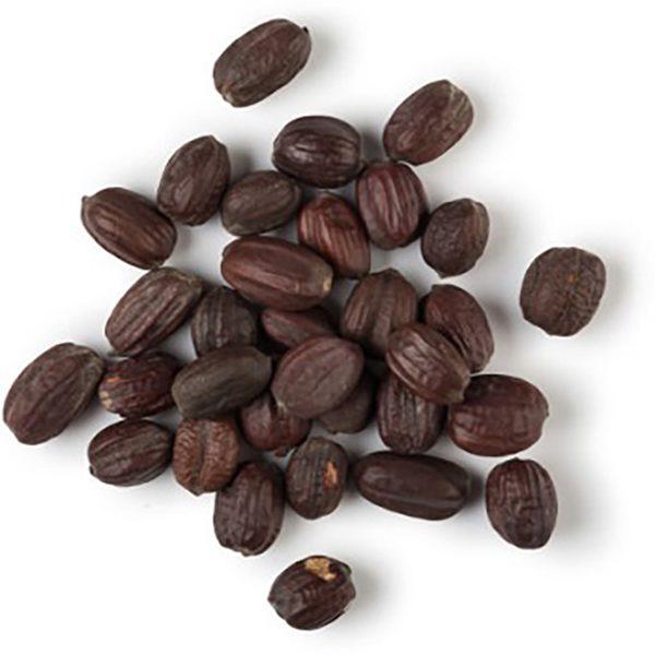hạt jojoba
