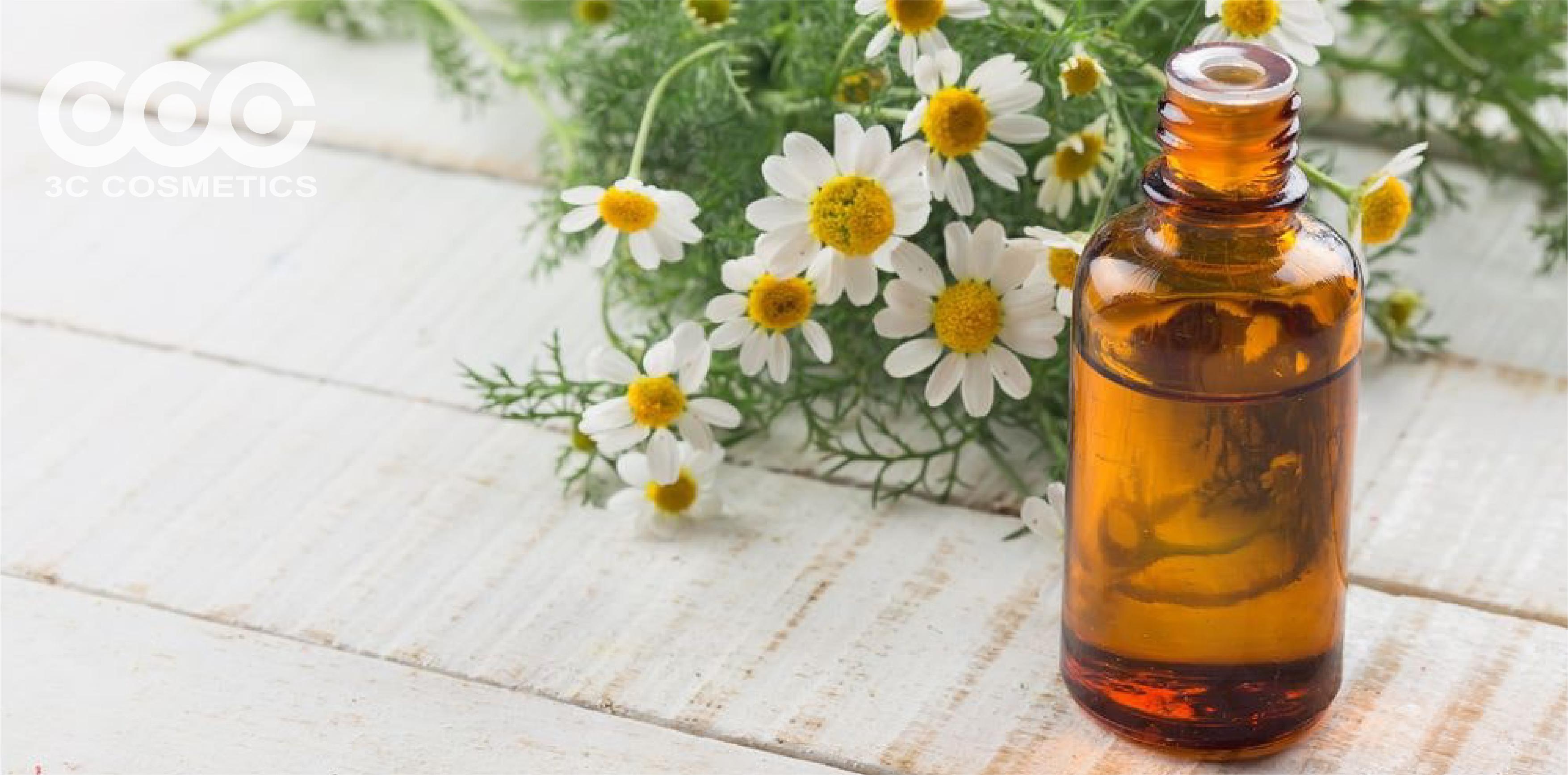 Những công dụng thần kì của tinh dầu hoa cúc