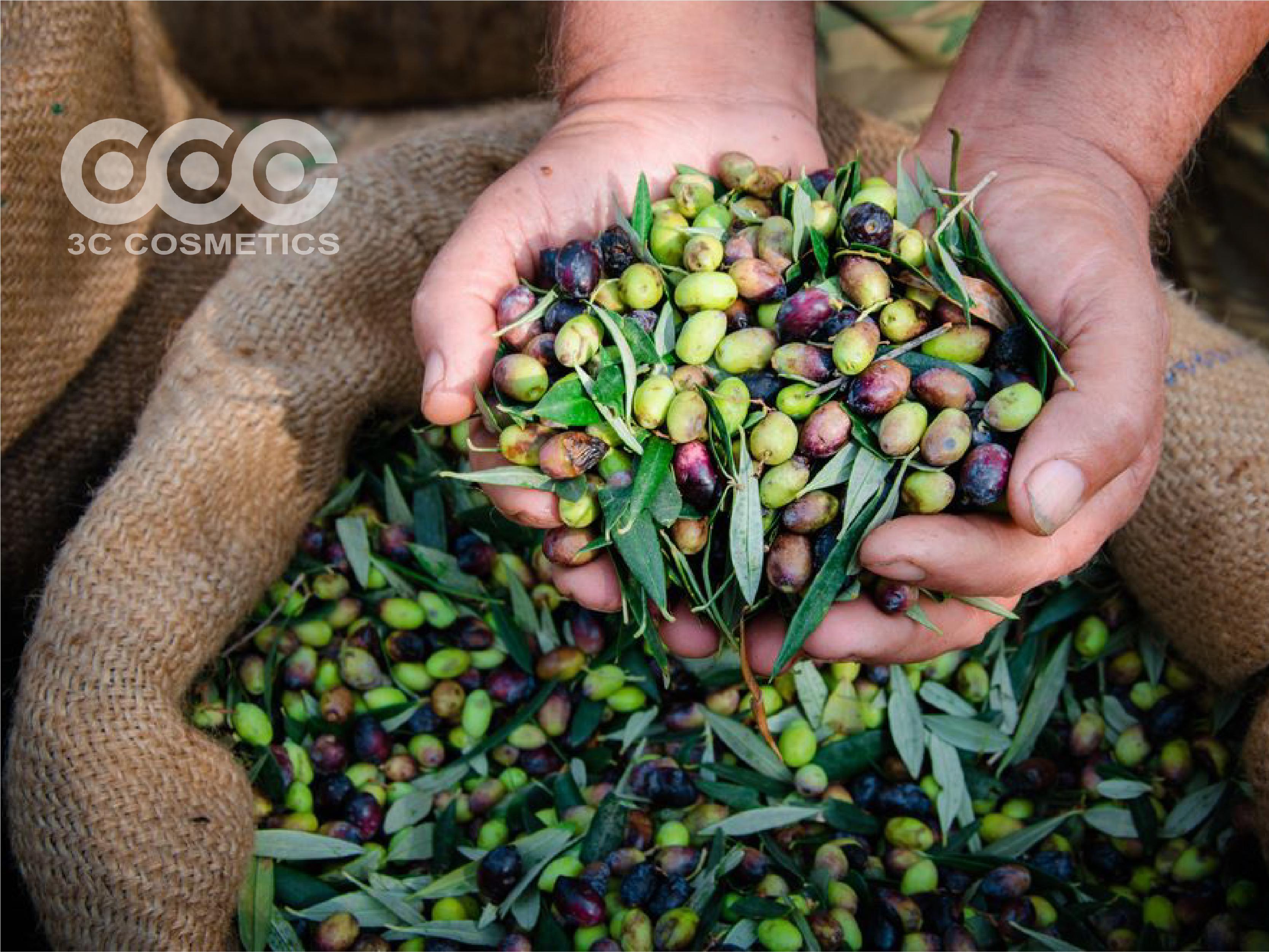 Dầu oliu được chiết xuất từ quả oliu