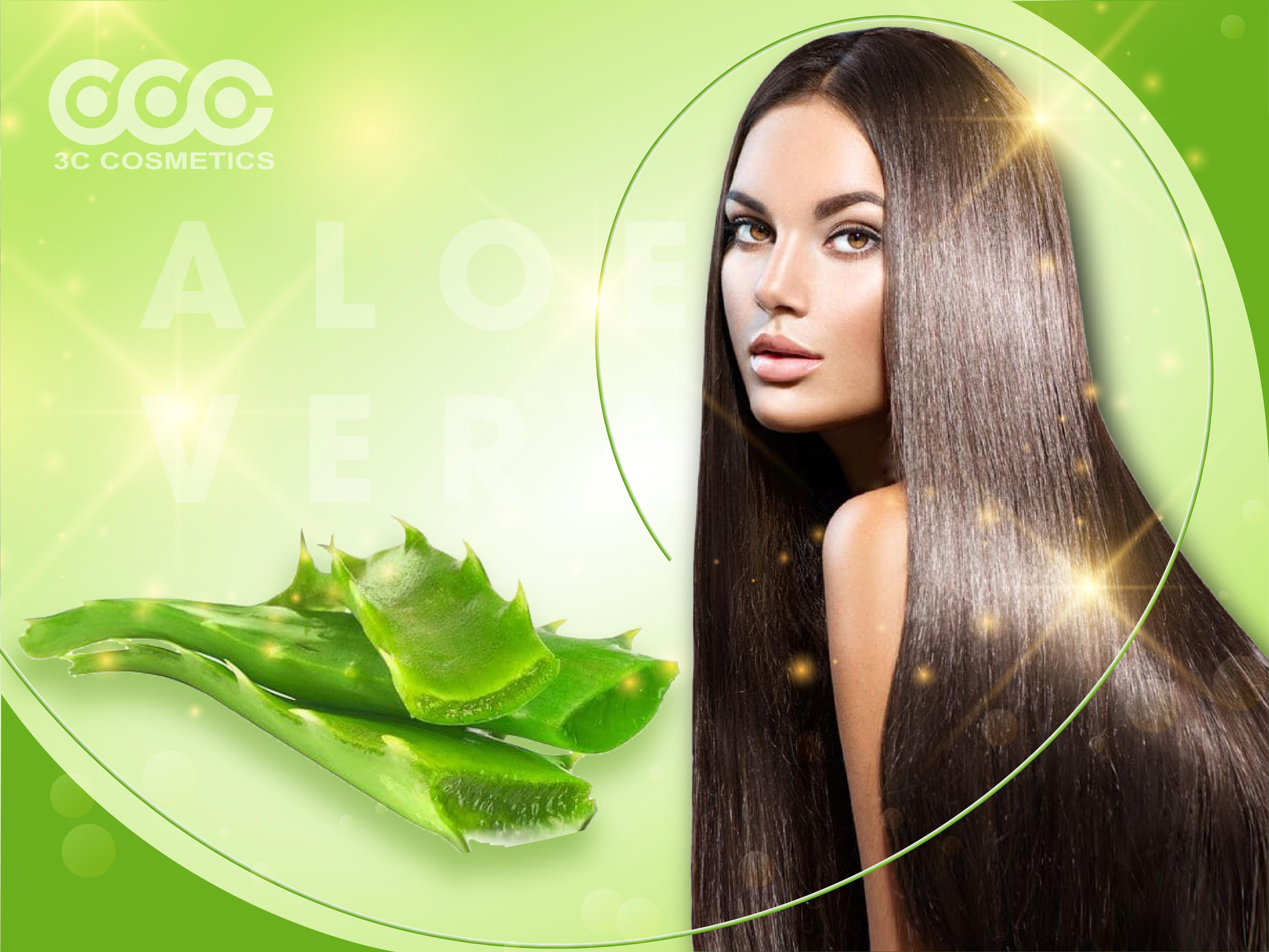 Phục hồi tóc hư tổn bằng lô hội